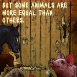 Animal Farm Sayings Pinterest