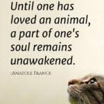 Animal Love Quotes Twitter