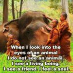 Animals Are Friends Not Food Quote