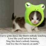 Baby Animal Quotes Twitter