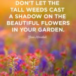 Beautiful Flowers Images With Quotes
