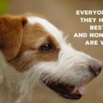 Best Dog Quotes Ever