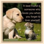 Cat And Dog Friendship Quotes Tumblr