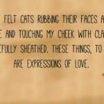 Cat Love Quotes Pinterest