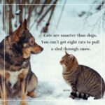 Cats Are Better Than Dogs Quotes Twitter
