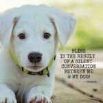 Cute Dog Pictures With Quotes