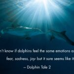 Cute Dolphin Quotes Tumblr