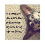 Dog Companion Quotes Tumblr