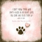 Dog Paw Print Quotes Tumblr
