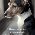 Dog Protecting Baby Quotes Pinterest