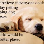Dog Sleeping Quotes Facebook