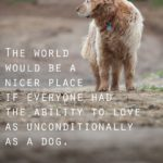 Dogs Are Man's Best Friend Quote