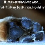 Dogs Lives Are Too Short Their Only Fault Really Pinterest