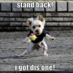 Funny Dog Sayings Pinterest
