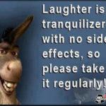 Funny Donkey Sayings Pinterest