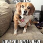 Funny Quotes About Puppies Facebook
