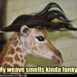 Giraffe Captions For Pictures Tumblr