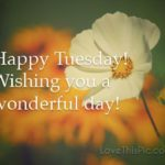 Good Morning Happy Tuesday Quotes Tumblr