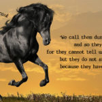 Horse Beauty Quotes