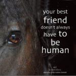 Horse Best Friend Quotes Tumblr