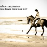 Horse Racing Captions Pinterest