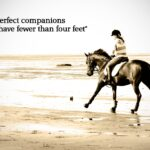 Horse Riding Quotes Pinterest