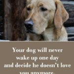 Inspirational Service Dog Quotes Pinterest