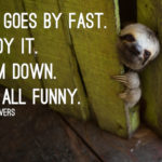 Inspirational Sloth Quotes