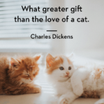 Love Quotes For Cats