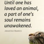 Love With Animals Quotes