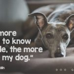 Man's Best Friend Dog Quotes