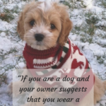 Man's Best Friend Dog Quotes Pinterest