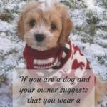 Man's Best Friend Dog Quotes Pinterest