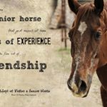 Old Horse Quotes