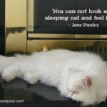 Persian Cat Quotes Twitter