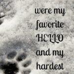 Pet Bereavement Quotes Tumblr