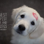 Pet Dog Love Quotes Pinterest