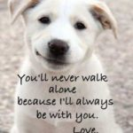 Pet Sayings And Phrases Tumblr