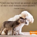 Pets Unconditional Love Quotes Pinterest