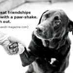 Quotes About Dogs Being Family Facebook
