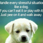 Therapy Dog Quotes Facebook